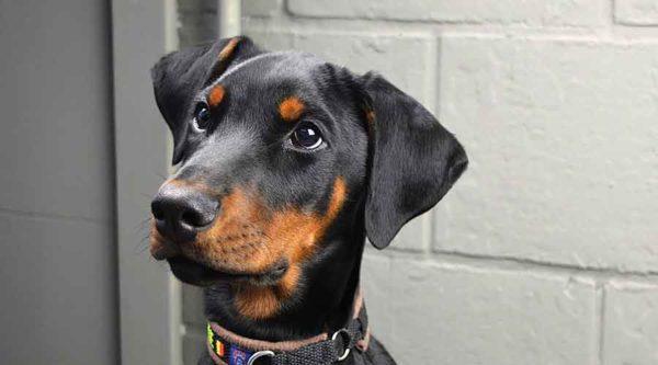 Need Basic Obedience or Advanced Dog Training?